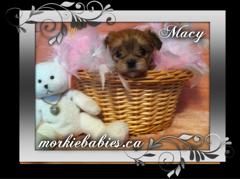 macy for webs