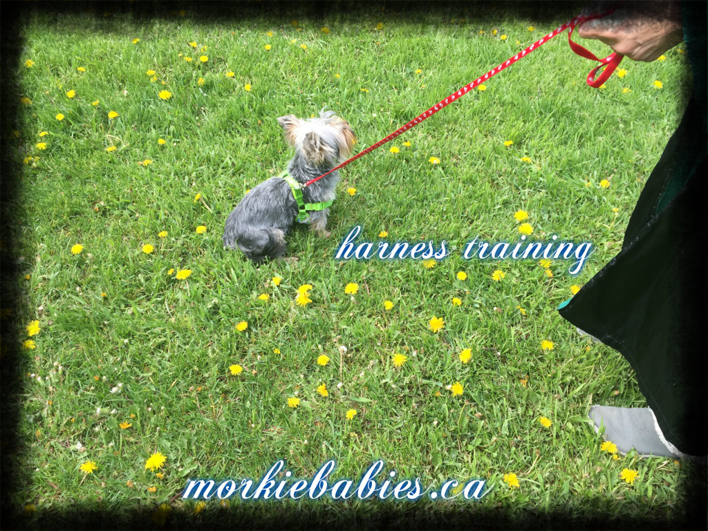 harness training