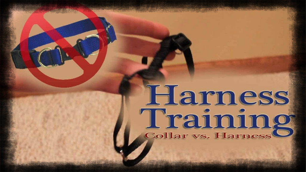 harness training